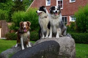 Bild: Siriushof, wo Hunden wilkommen sind.
