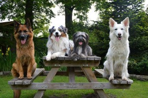 Bild: Ferienwohnung Sirius 3, urlaub mit Hund in schönes Ostfriesland